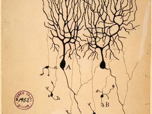 Santiago Ramón y Cajal: el científico al que le debemos mucho de lo que sabemos sobre las neuronas