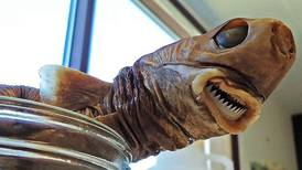 Encuentran que la especie más pequeña de tiburón se alimenta de grandes depredadores o peces diminutos