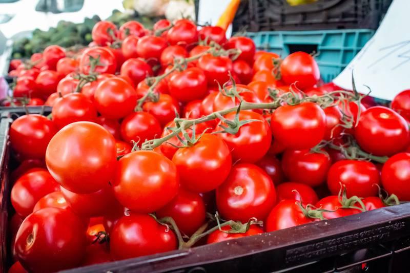 Los tomates con genoma editado están listos para llegar a los estantes de las tiendas en Japón.