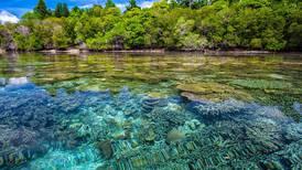 Cambio climático, contaminación y turismo han disminuido la mitad de la cobertura de arrecifes de coral desde 1950
