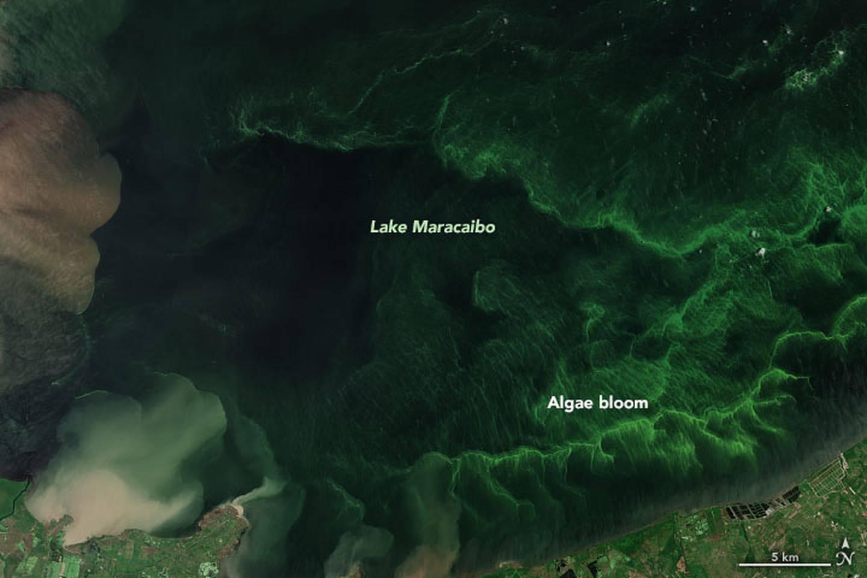 La vegetación generalizada en el agua es otro signo de angustia.