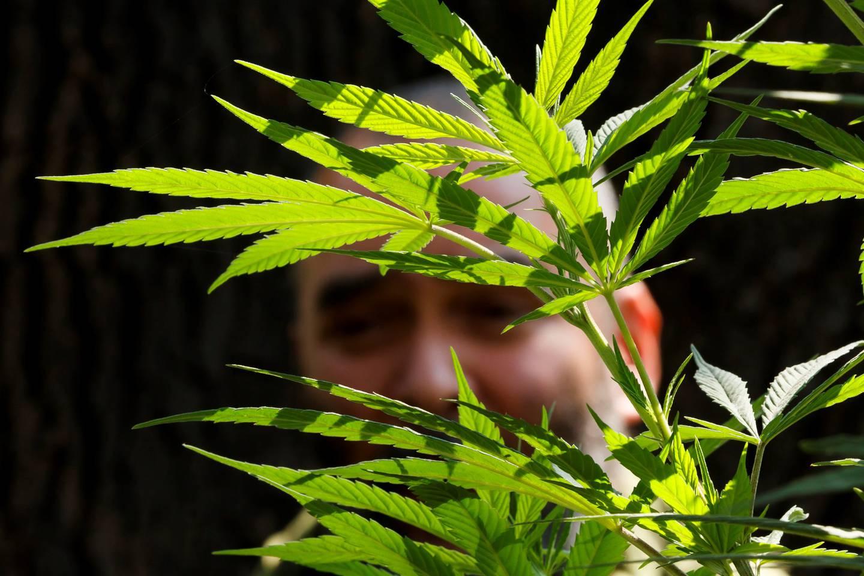 La millonaria multa que policía impuso a conductor porque el carro olía a marihuana