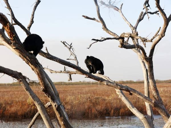 Algunos carnívoros se turnan para cazar, con el fin de ahorrar recursos y sobrevivir