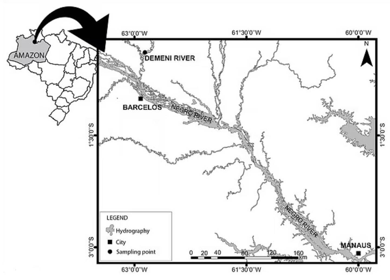 Los investigadores recolectaron diferentes especies de peces en el Río Negro, un importante río afluente del Amazonas.